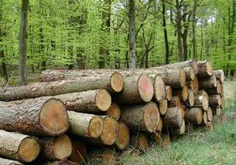 L'Oréal promoverá en Burgos una planta de energía alimentada con biomasa